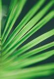 棕榈树-旅行,异乎寻常和热带背景称呼了概念 免版税库存图片
