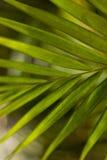 棕榈树绿色未聚焦的木头 免版税库存图片