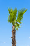棕榈树 免版税图库摄影