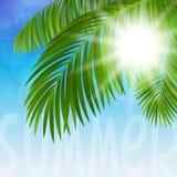 棕榈树 库存图片