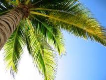 棕榈树 库存照片
