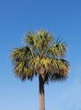 棕榈树- 库存图片