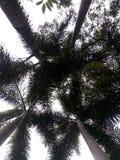 棕榈树aboveside  免版税库存照片