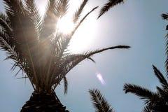 棕榈树leafes阳光 库存照片