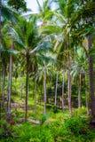 棕榈森林,泰国 库存照片