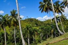 棕榈森林 免版税库存照片