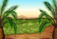 棕榈植物和草 库存图片