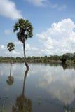 棕榈汁在盐水湖 库存照片