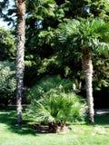 棕榈油种植园和早晨阳光 库存照片