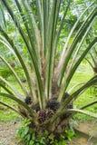 棕榈油结构树 免版税库存图片