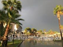 棕榈洗涤与温暖的9月雨,轻轻地闪耀与绿叶在阳光下 免版税库存图片