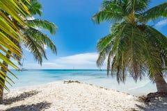 棕榈滩躺椅 免版税库存图片