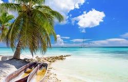 棕榈滩躺椅 库存图片