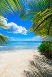 棕榈滩躺椅 库存照片