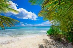 棕榈滩躺椅 免版税库存照片