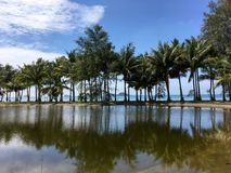 棕榈滩,热带天堂,树反射在水的,海边,蓝天 库存图片