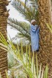 棕榈的人 库存照片