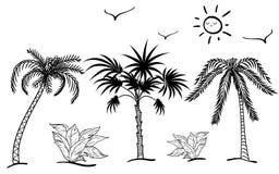 棕榈的剪影 免版税图库摄影
