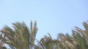 棕榈的叶子在风,从明亮的太阳的强光增长 关闭 股票录像