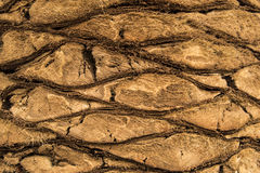 棕榈的树干的样式 库存照片