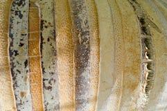 棕榈的黄色外壳的纹理有垂直的小条的 抽象背景异教徒青绿 库存照片