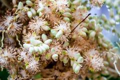 棕榈种子新的叶子在雨下落以后起动了,几天 库存照片