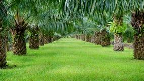 棕榈种植园 免版税库存图片