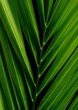 棕榈科叶子掌上型计算机 库存图片