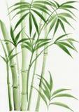 棕榈竹子水彩绘画  免版税库存图片