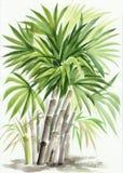棕榈竹子 库存例证