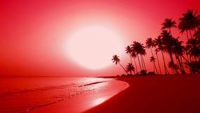棕榈群岛太平洋,自然红色黎明棕榈树海岛 影视素材