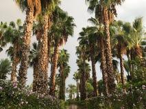 棕榈胡同在旅馆在Belek 免版税库存照片
