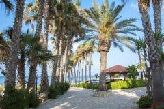棕榈胡同在普罗塔拉斯,塞浦路斯 免版税库存图片