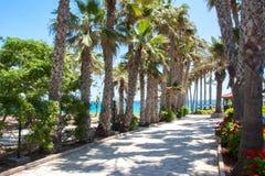 棕榈胡同在普罗塔拉斯,塞浦路斯 免版税图库摄影
