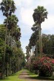棕榈胡同 免版税图库摄影