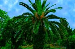 棕榈蓝天 免版税库存图片