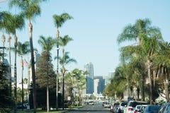 棕榈被排行的街道 库存图片