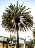 棕榈,通过圈地-圈地驱动-洛杉矶, LA,加利福尼亚,加州 库存图片