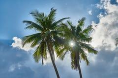 棕榈从底部观看 库存图片