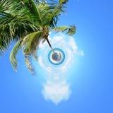 棕榈360度视图在海滩的 库存照片