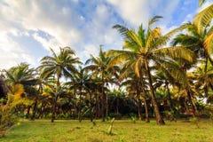 棕榈滩风景 免版税库存照片