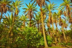 棕榈 库存图片