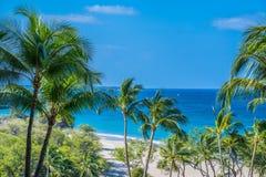棕榈滩 库存图片