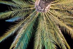 棕榈 免版税库存照片