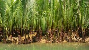 水棕榈 库存照片