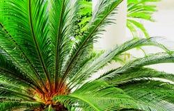 棕榈 库存照片