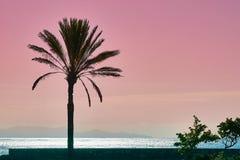 棕榈babassu日落天空背景 免版税图库摄影