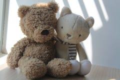 棕熊和小猫由在阴影的窗口戏弄坐 免版税图库摄影