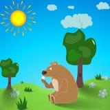 棕熊在夏天 库存例证