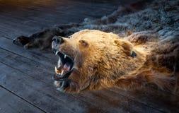 棕熊填充动物玩偶 免版税库存图片